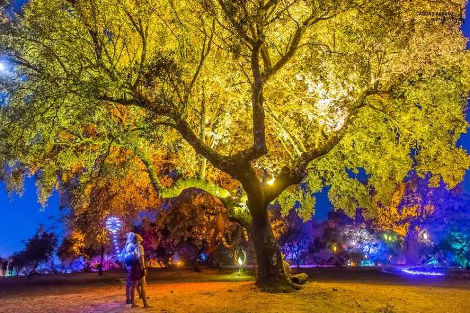 Magic tree lights at boom festival