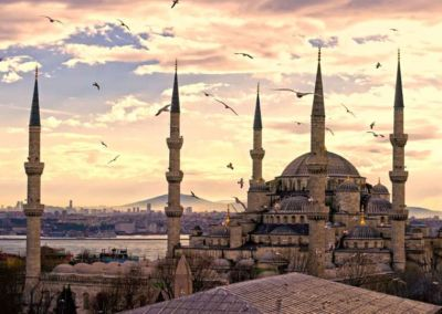 Hagia Sofia sea birds in Istanbul
