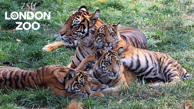 best family destinations London zoo